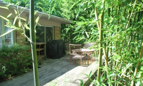 Invasive Plant Species Invasive Bamboo Species Houselogic with regard to Bamboo Ideas For Backyard