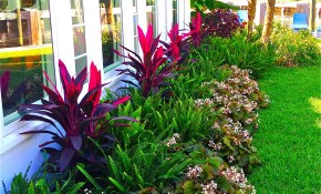 Stunning Way To Add Tropical Colors To Your Outdoor Landscaping for Florida Backyard Landscaping Ideas