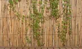Backyard X Scapes 6 Ft H X 16 Ft L Natural Jumbo Reed Bamboo Fencing inside Home Depot Backyard Fence