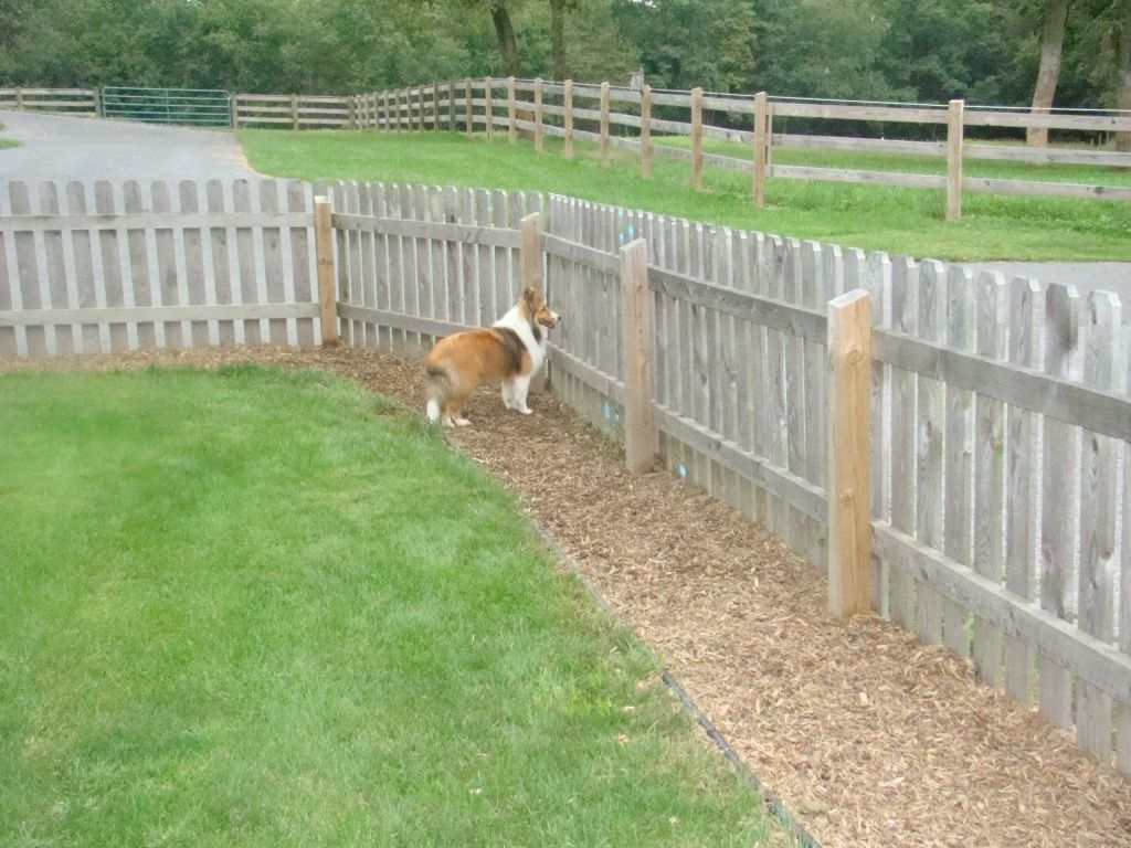How To Use Temporary Dog Run Fence within Backyard Fences For Dogs