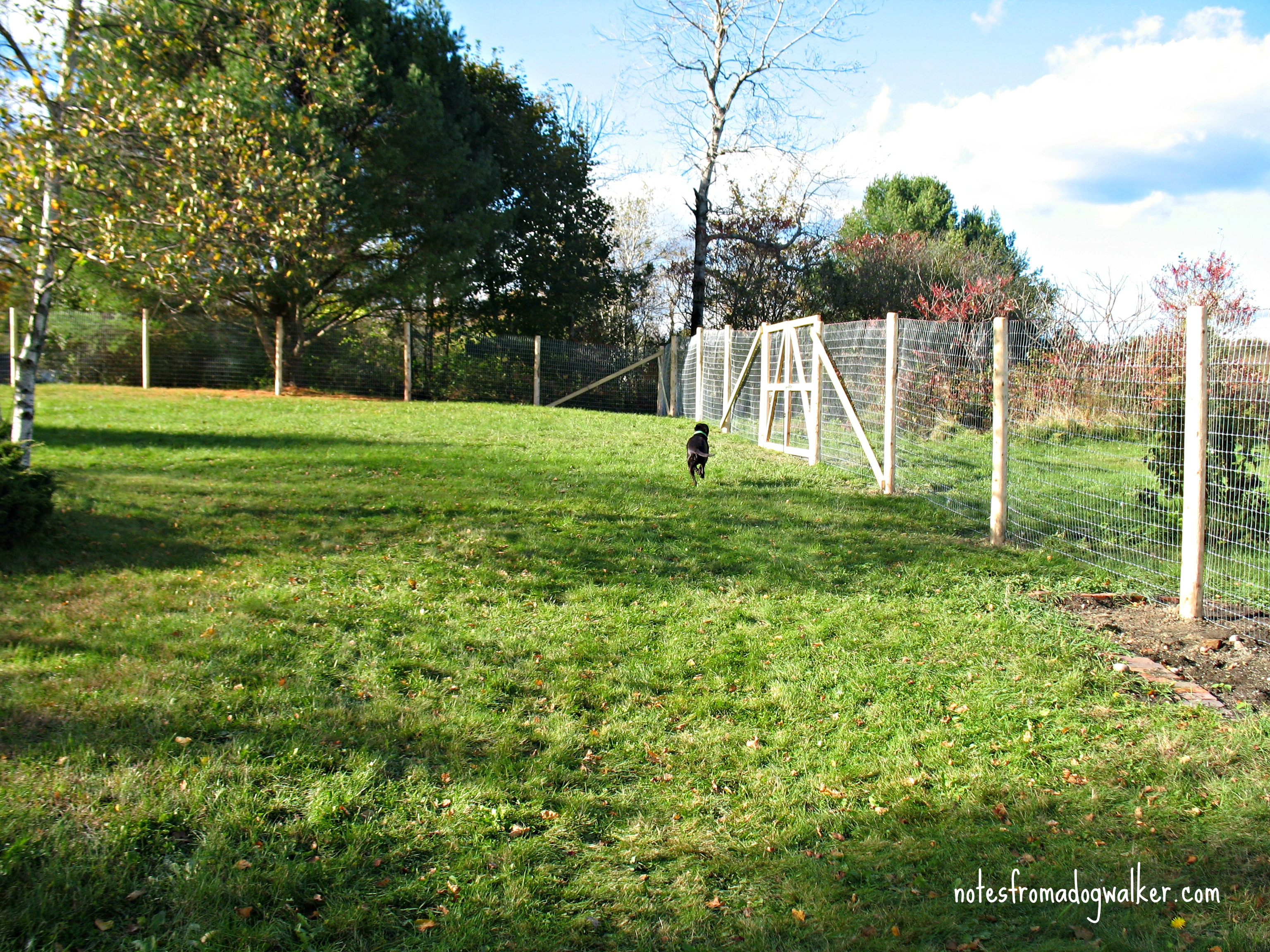 Peace In The Yard 7 Ways To Dog Proof Your Fence Notes From A Dog intended for 10 Genius Concepts of How to Make Backyard Fencing For Dogs