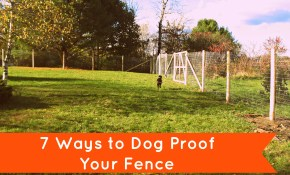 Peace In The Yard 7 Ways To Dog Proof Your Fence Notes From A Dog throughout Backyard Fences For Dogs
