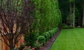 Backyard Privacy Fence Landscaping Ideas On A Budget 36 with regard to 11 Clever Initiatives of How to Build Landscaping Ideas For Backyard Privacy