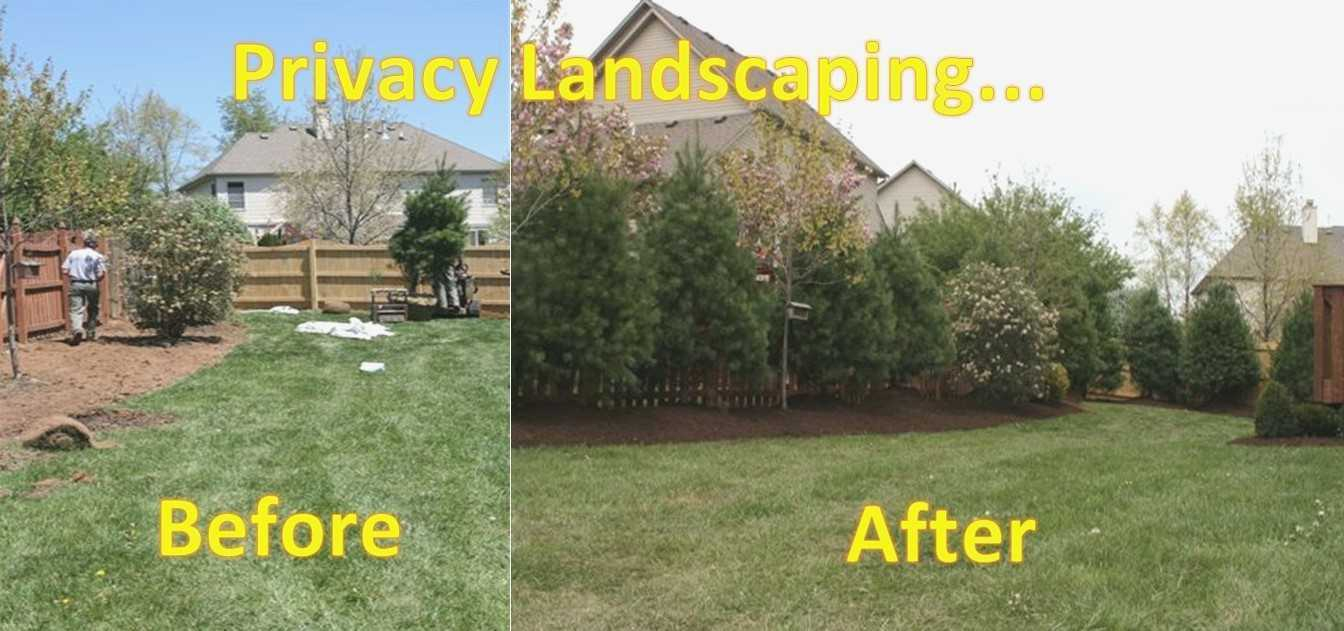 Backyard Privacy Landscaping Ideas On Landscaping For with 14 Awesome Initiatives of How to Craft Privacy Backyard Ideas