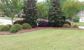 Great Landscaping Idea For A Corner Creating Outdoors Privacy for 11 Clever Tricks of How to Build Backyard Corner Landscaping Ideas