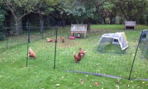 Poultry Netting Kits Explained The Best Poultry Electric Netting Kits intended for 10 Clever Concepts of How to Build Backyard Electric Fence