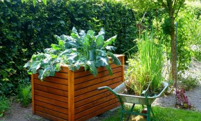 Raised Bed Gardens And Small Plot Gardening Tips The Old with Small Backyard Vegetable Garden Ideas
