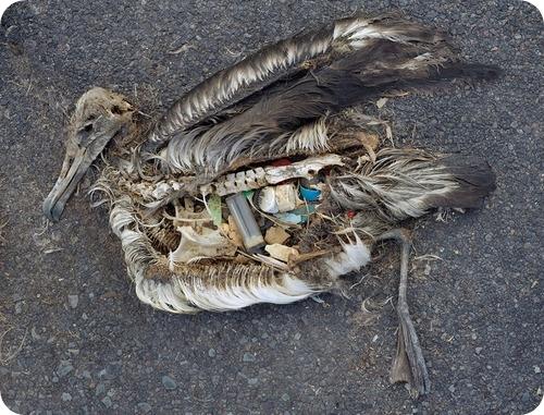 burung makan sampah