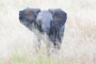 Tanrangire National Park, Tanzanie