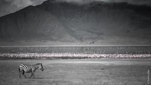 Ngorongoro, Tanzanie