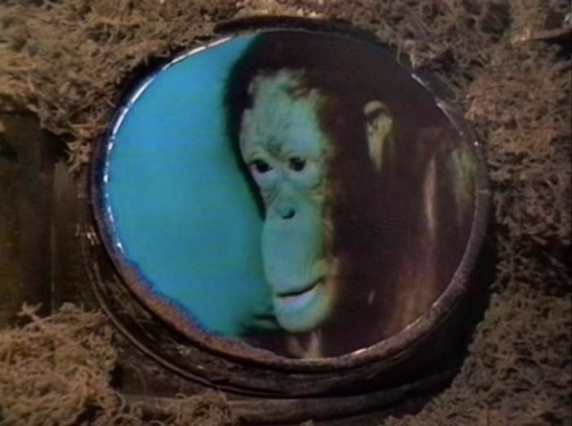 Photo of chimp