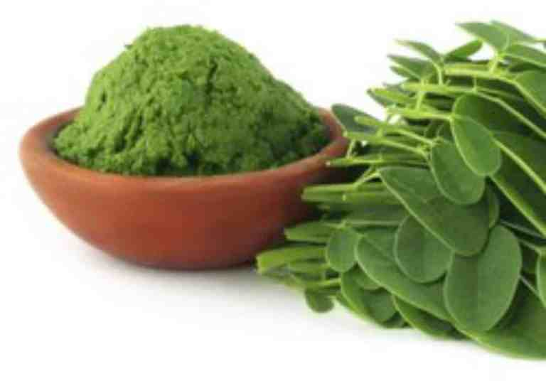 India starts export of Moringa powder