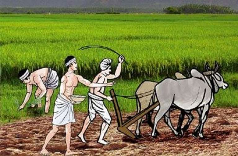 Big relief for farmers, Centre postpones paddy procurement in Punjab & Haryana due to heavy rainfall