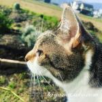 愛猫ミミとの別れは「今までありがとうございます」の気持ちです。