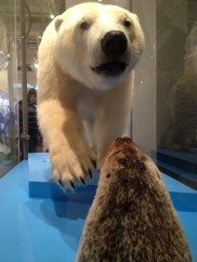 Polar bear and a seal at the ROM