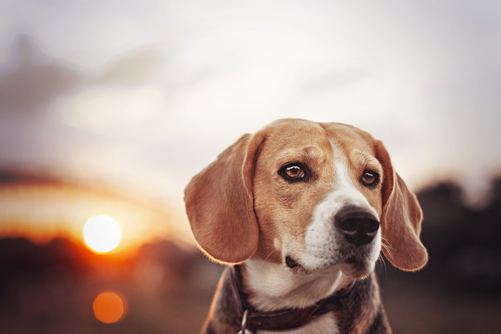 dog-retusche-nachher-1