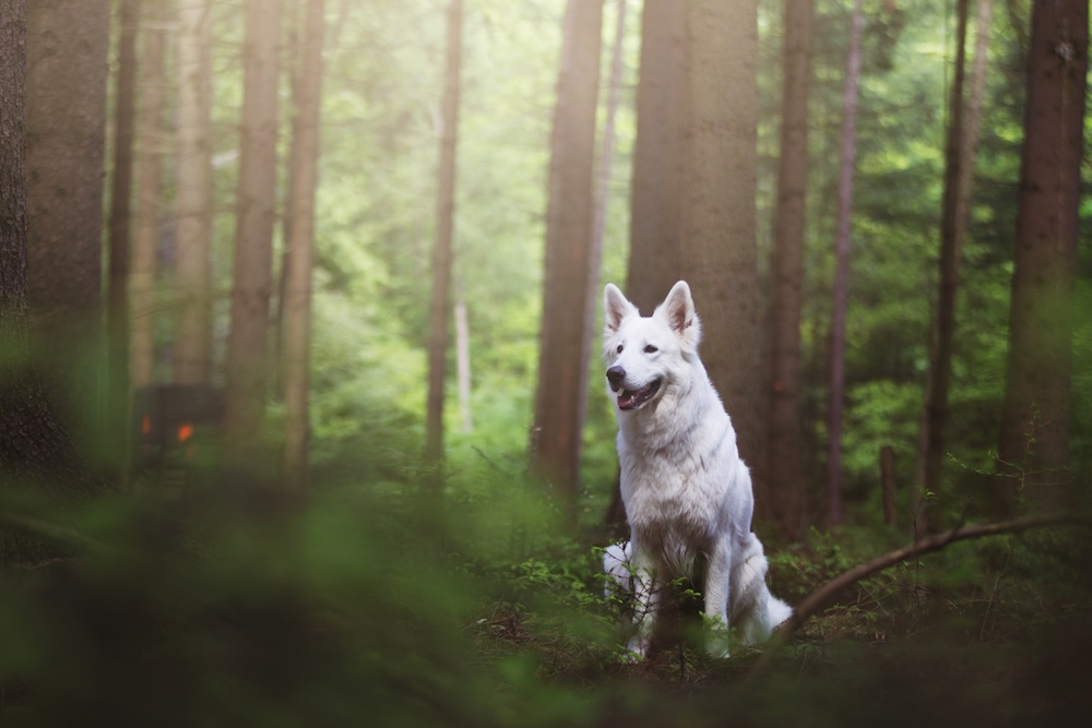 dog-retusche-vorher-2