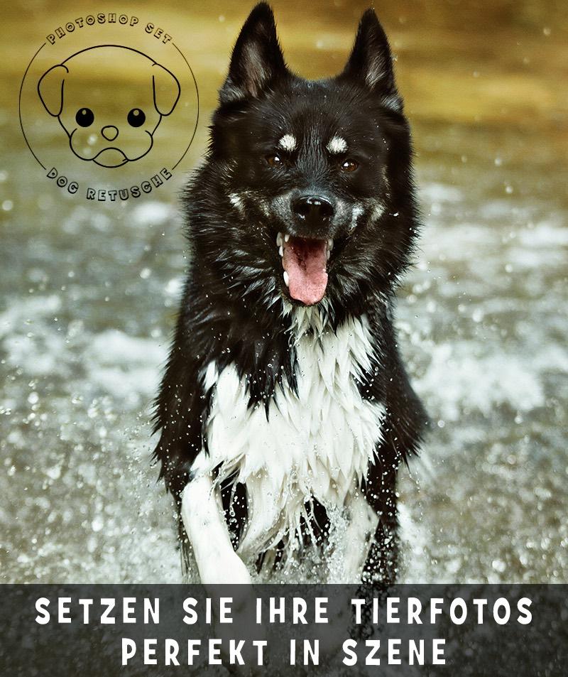 photoshop-dog-retusche-3