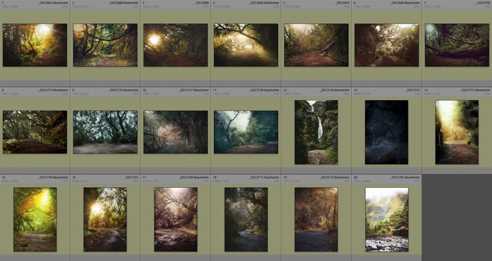 madeira-dschungel-collage