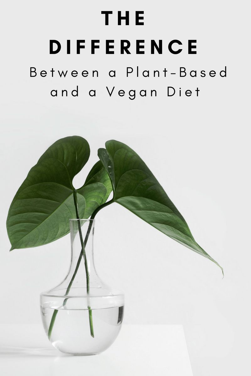 The Difference Between a Plant-Based and a Vegan Diet - Tayler Silfverduk - Want to know what's different between eating plant-based and vegan? This post breaks it down!