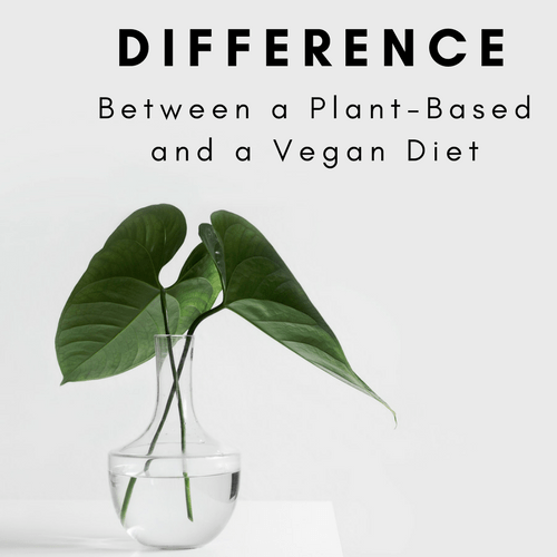 Difference Between a Plant-Based and a Vegan Diet