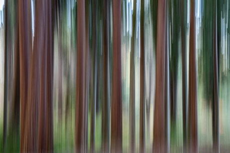 Intentional Camera Movement image