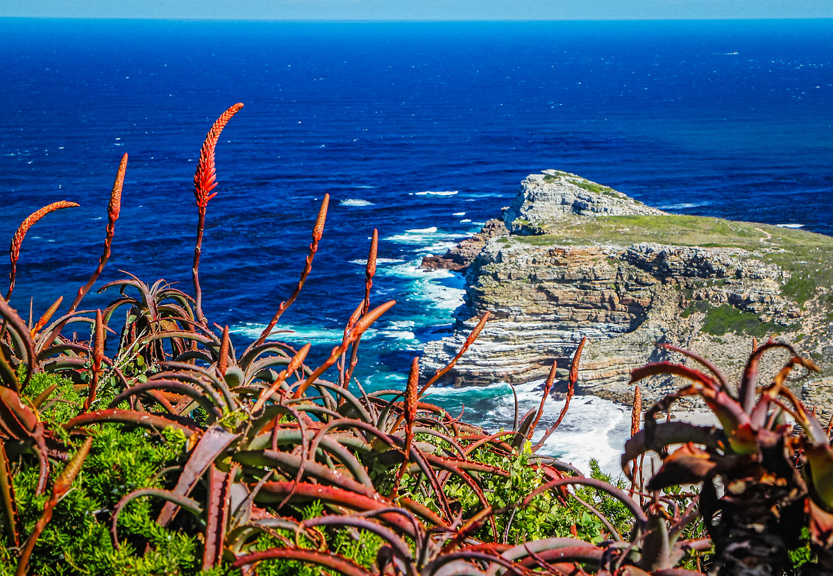 Cape of Good Hope 7