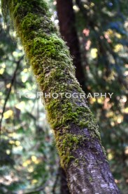 Moss | Taylor Cannon Photography