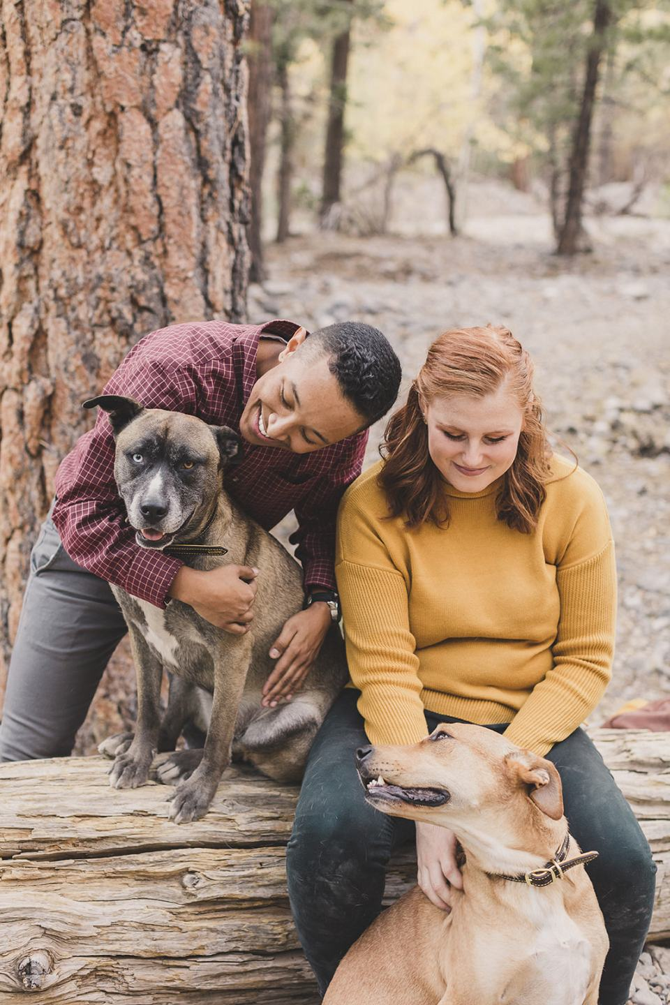 couple sits on fallen log in Mt Charleston with dogs