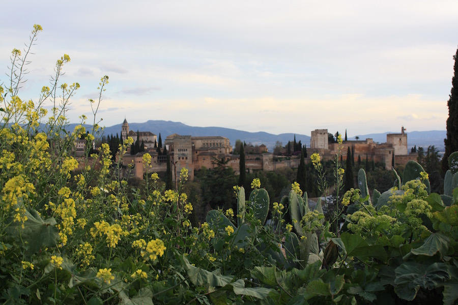 A view of the Alhambra in Granada, Spain in front of yellow and green flowers and cacti