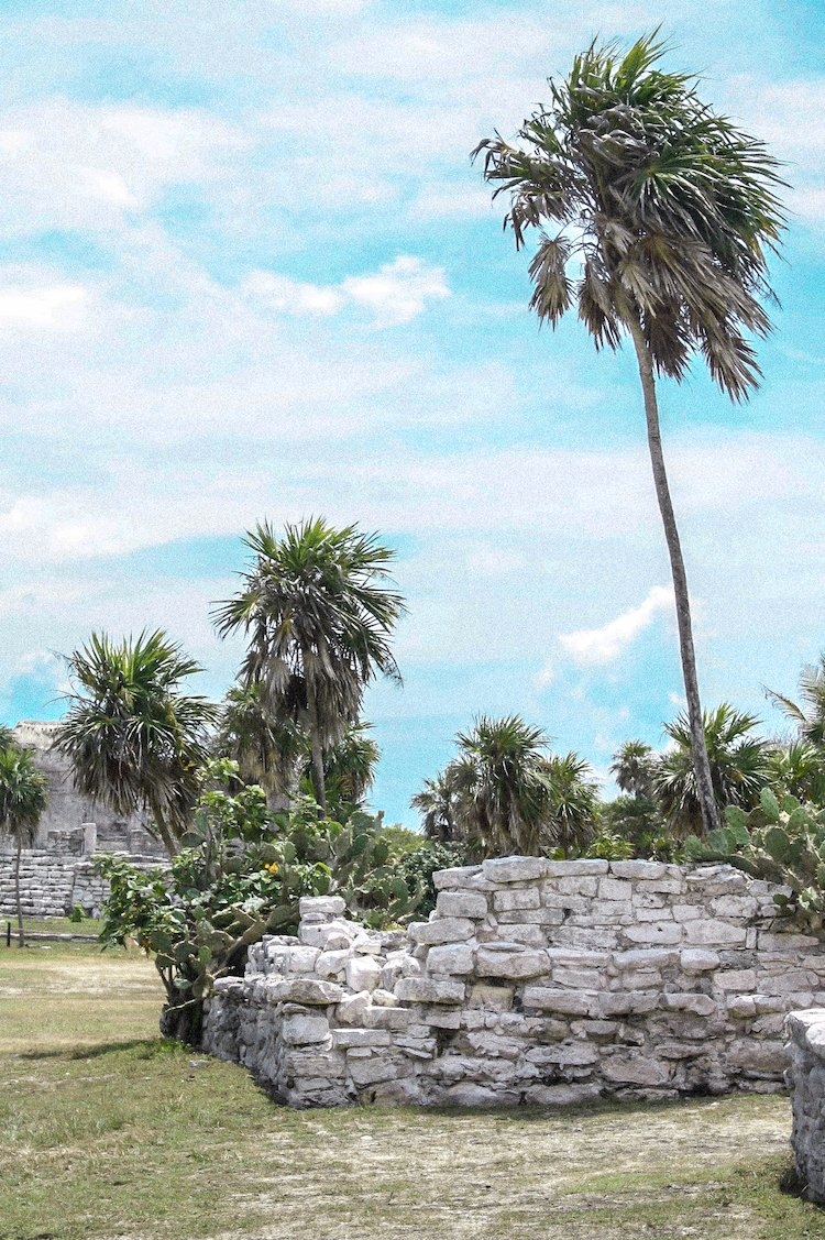 Ruins and palm trees at the Tulum Ruins in Mexico