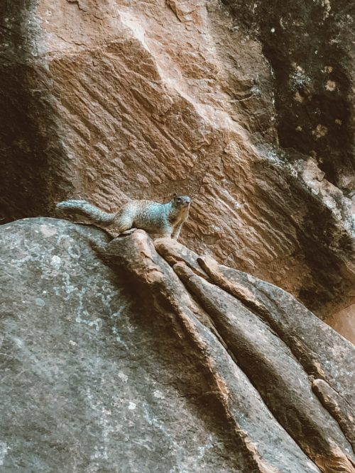 10 Essential Tips for Hiking The Narrows