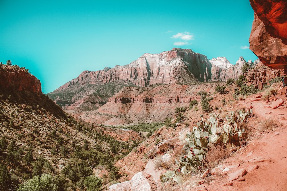 Cacti and cliffs in Zion National Park, Utah