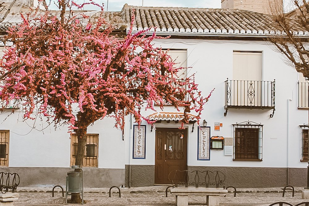 A pink tree stands in front of a white building with arabic writing in Granada, Spain