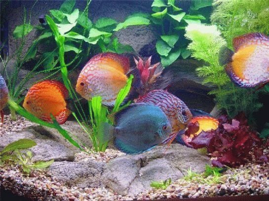 Totul despre primul tău acvariu. Ce peşti să cumperi şi cum îi îngrijeşti