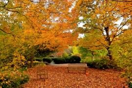 Cantigny Park in Fall - Wheaton, Ilinois