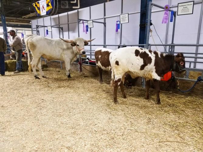 Pennsylvania Farm show Harrisburg 2017