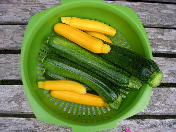 A colander full of green and yellow courgettes