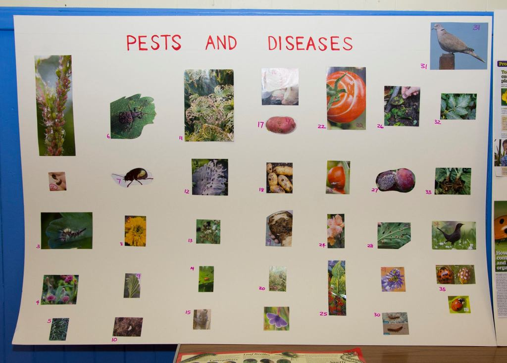 A set of pictures with pests and diseases