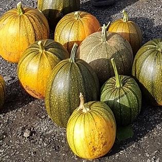 Tayport Community Garden pumpkins