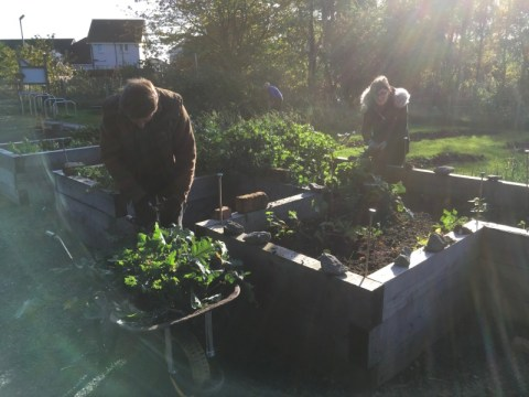 Louise and Peter clearing raised bed