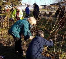 photo of people Shaping our living willow tunnel