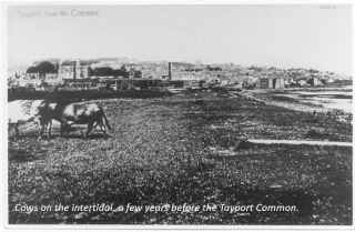A photo of Grazed salt marsh at Tayport Common a 100 years ago