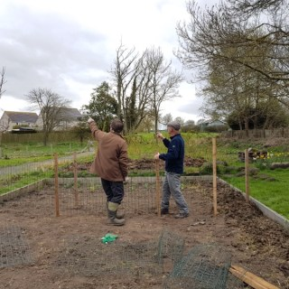 Peter and Bill putting up pea supports