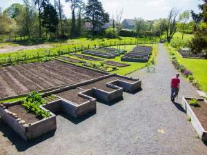 Open gardening session - restricted numbers @ Tayport Community Garden