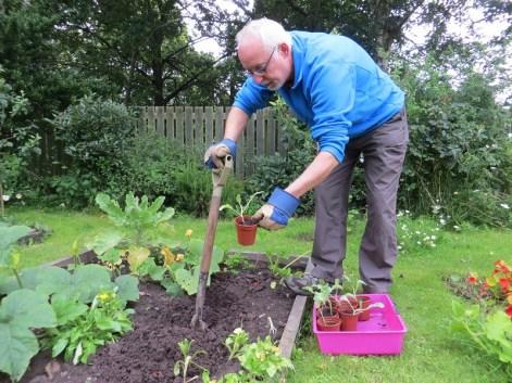 Fraser preparing ground for Brassica planting at Kathleen's garden