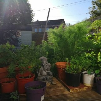 Herbs in Angela's permaculture garden