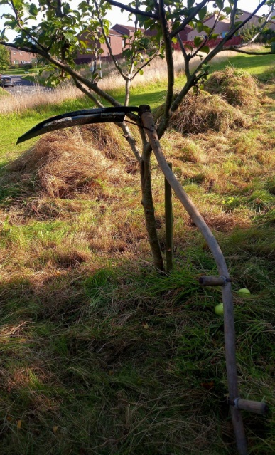 A photo of a scythe in the community orchard