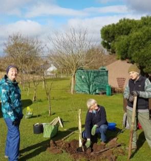 Fruit tree walk crew replacing trees in March 2021