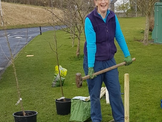 Julie with a mullet planting an apple tree